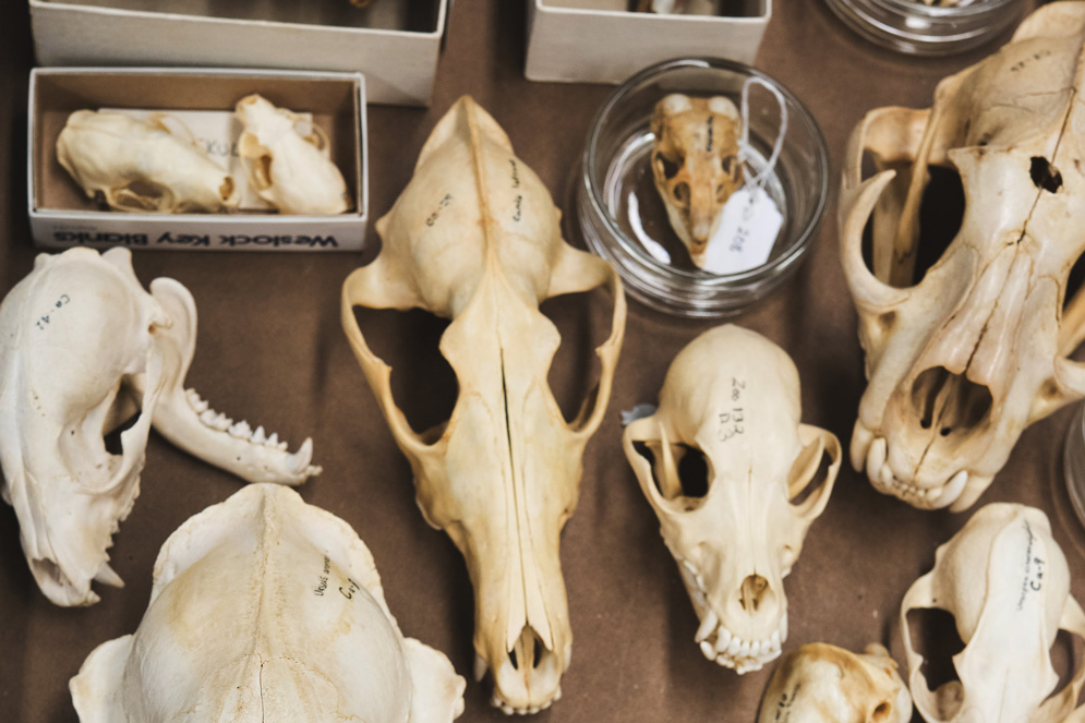 Roest Vertebrate Biology Collection