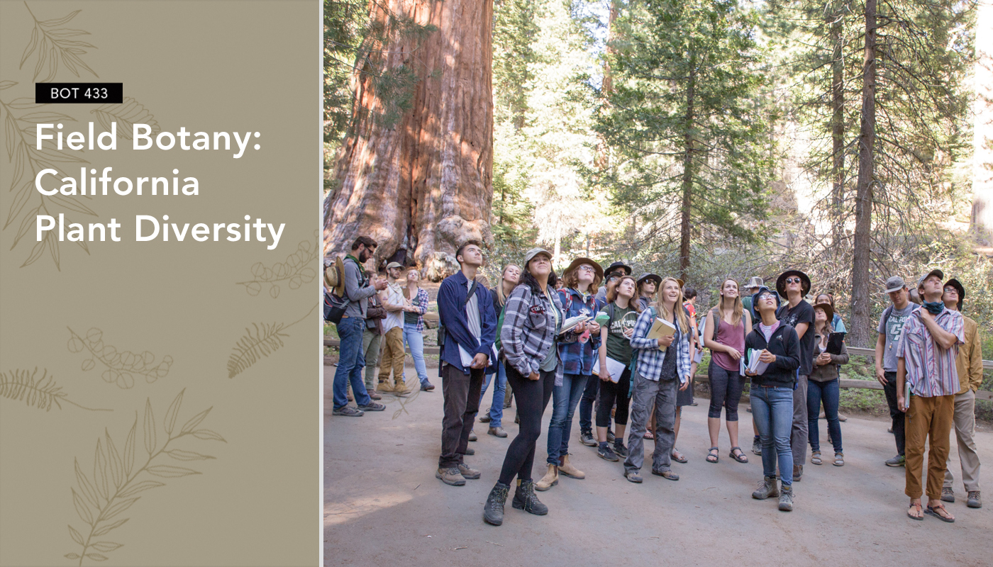 BOT 433: Field Botany – California Plant Diversity
