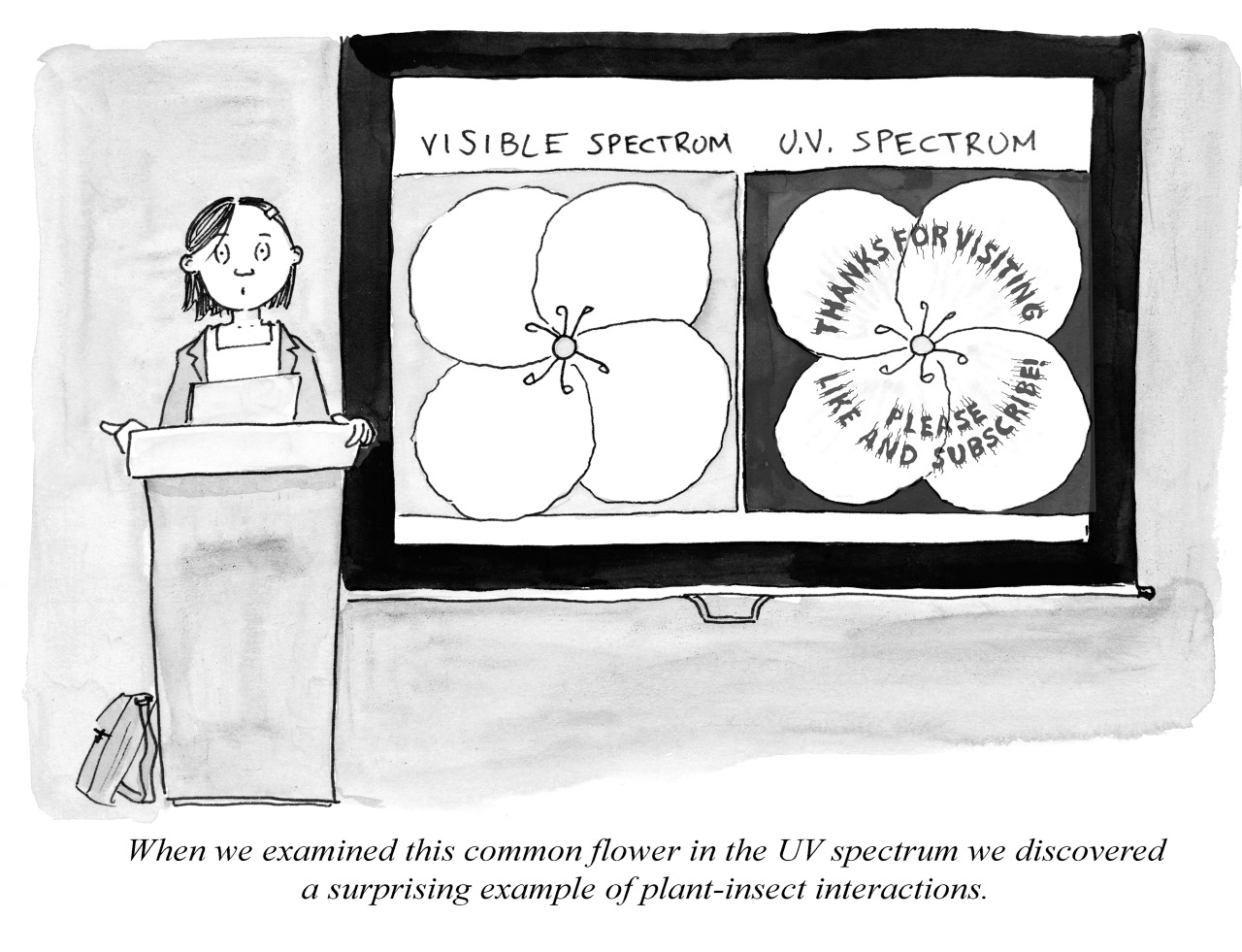 "An illustration of a scientest speaking at a podium in front of a slide saying ""visible spectrum, U.V. Spectrum."" The illustration has the caption ""When we examined this common flower in the UV spectrum we discovered a surprising example of plant-insect interactions."""