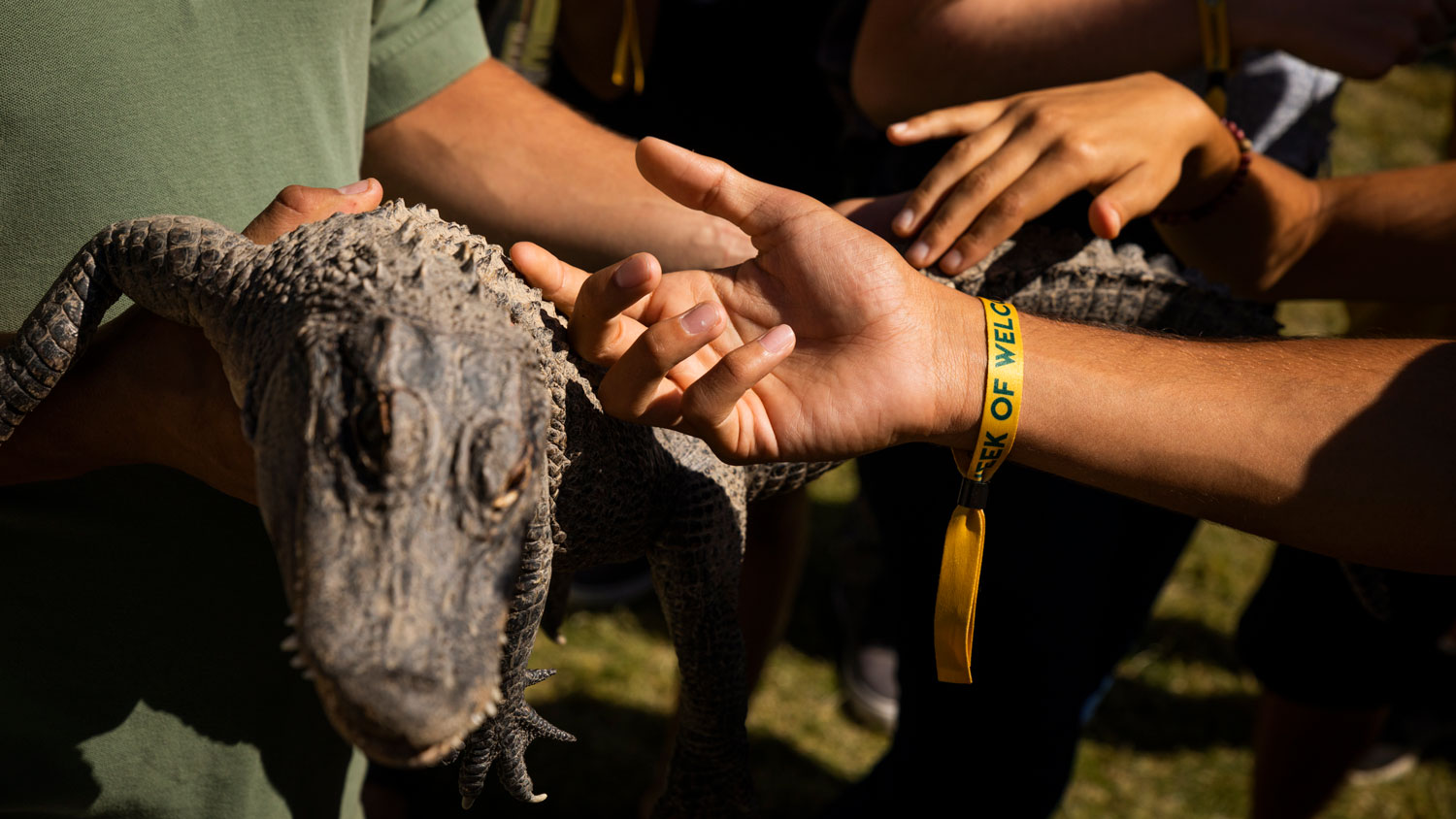 Students pet a small crocodile at the Zoo to You event at Week of Welcome