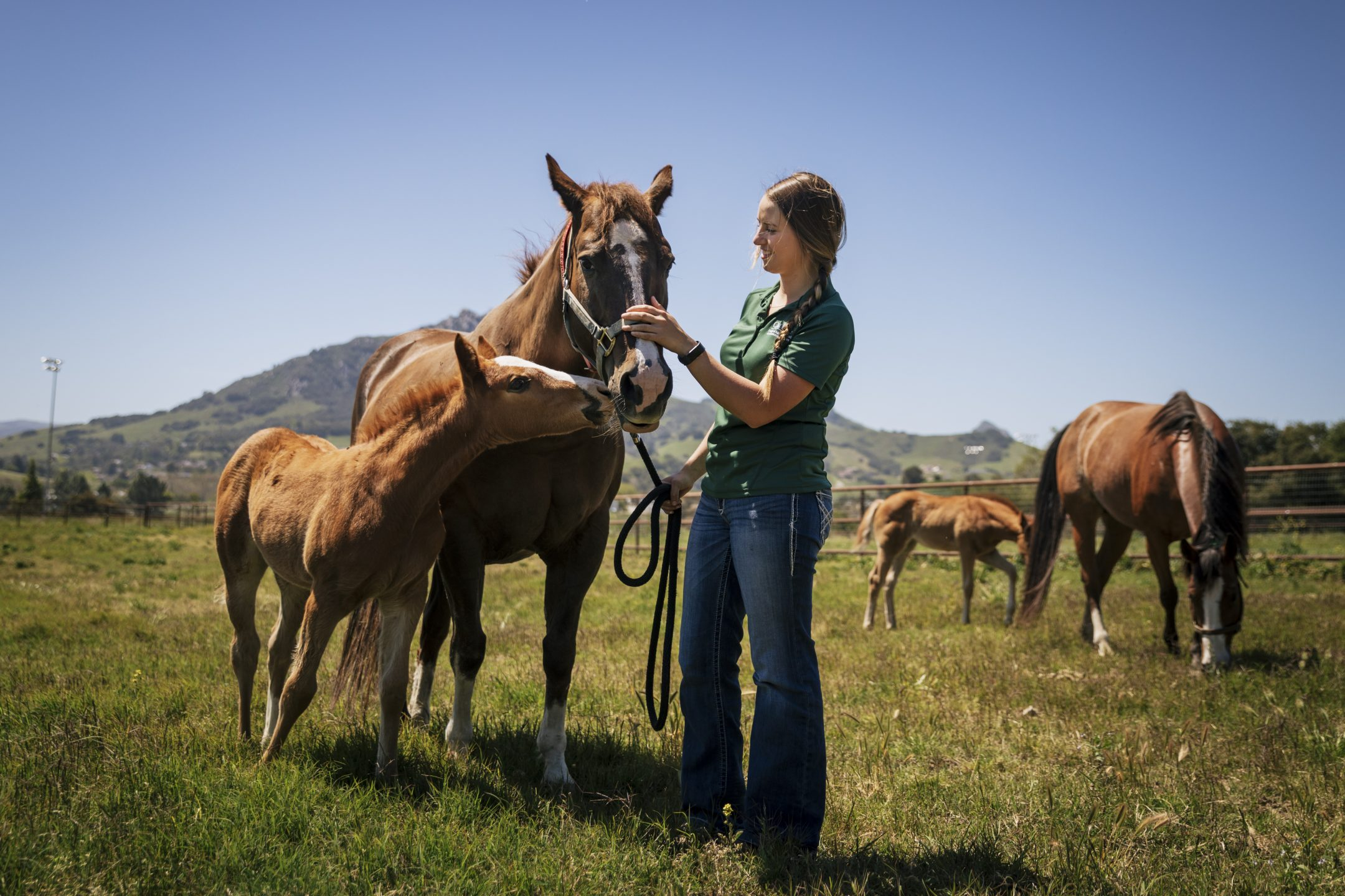 A young woman in a green Cal Poly polo shirt pets a mare while a young foal nuzzles its mother in an open field with mountains in the background.
