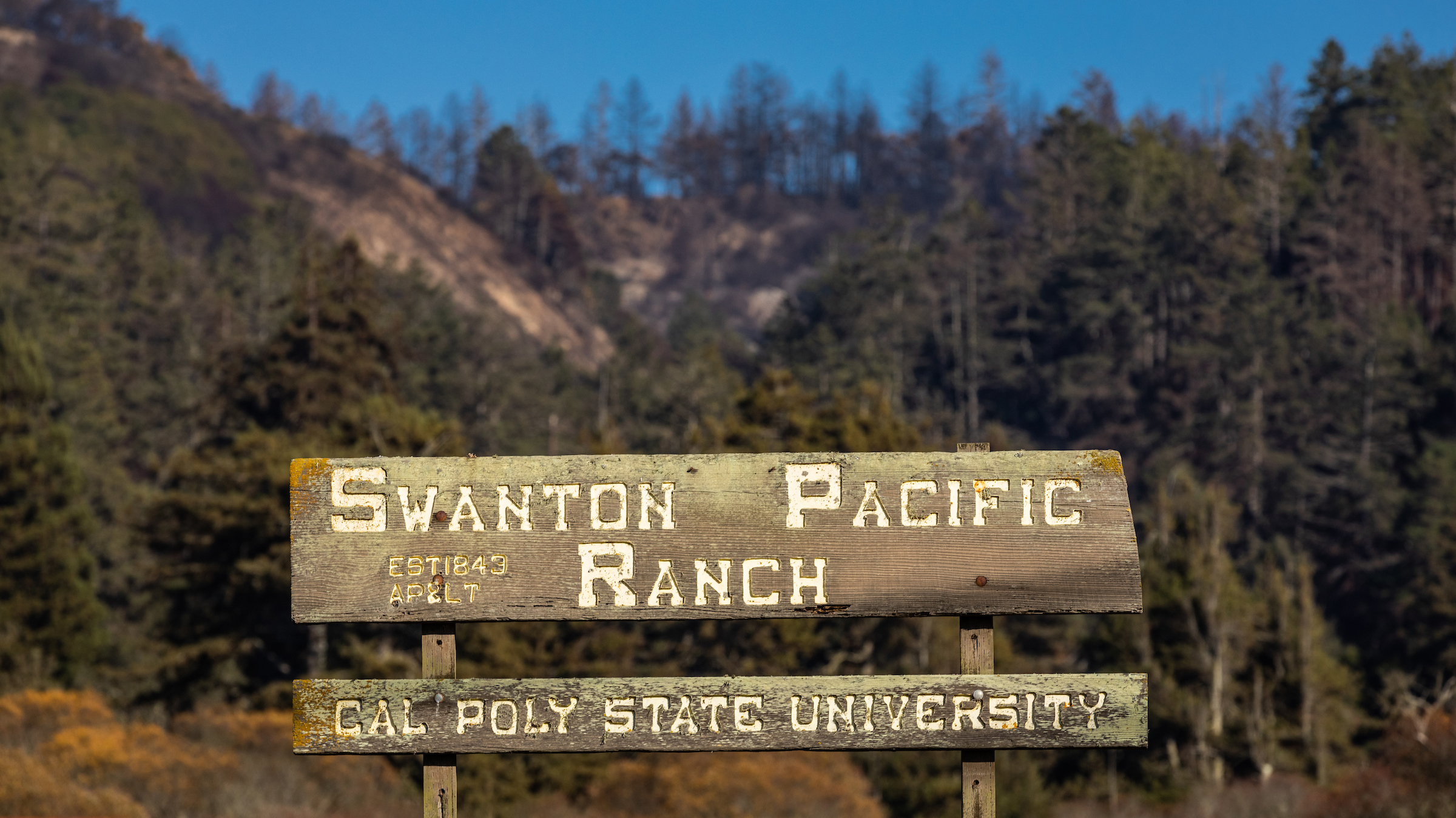 "A wooden sign reading ""Swanton Pacific Ranch - Cal Poly University"" in front of a hillside of burned evergreen trees."