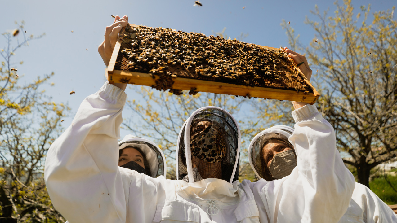 Three beekeepers hold up part of a beehive
