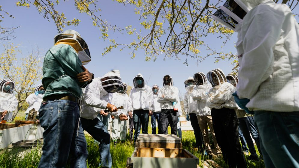 Students in white coats and helmets stand under trees while working with bee hives