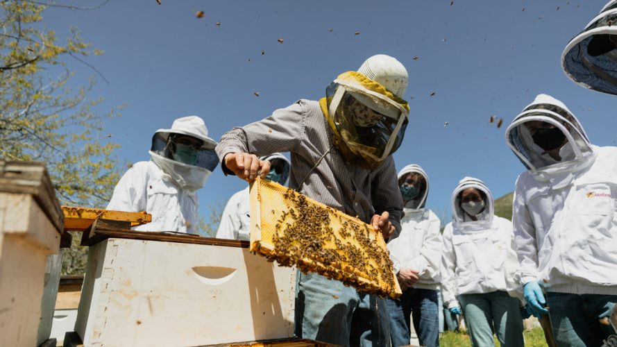 Beekeepers handle bee hives in helmets and white coats